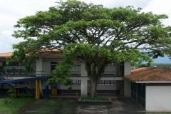 Árbol-Pedacito-Cielo