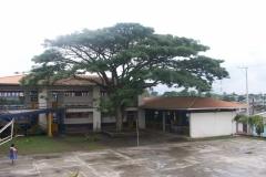 Patio-año-2008